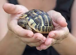 turtle care 101 care pet turtles petmd