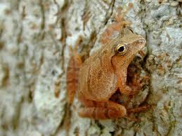 frog factors ponds streams waterfalls watershapes