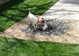 Garden Ideas For Dogs 8 Backyard Ideas To Delight Your
