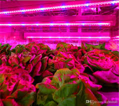 t5 vs led grow lights t5 tube grow l 18w 12 7w 120cm t8 led plant grow light red and