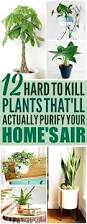 Best Plants For Bedroom The 25 Best Indoor Plant Decor Ideas On Pinterest Plant Decor