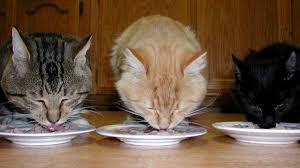 what u0027s the best treatment for cat hoarders u2014 newsworks