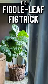 45 best house plants images on pinterest indoor gardening
