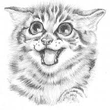 kitten sketch u2013 images free download