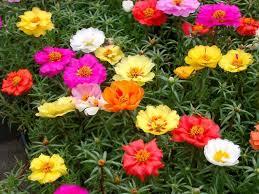Flower Seeds Online - annual biennial u0026 perennial flowers take your flower seeds
