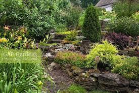 gap gardens hemerocallis hybrid daylilies on the left and