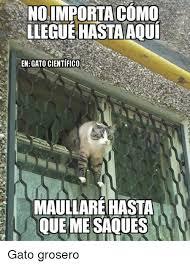 imagenes groseras de gatos noimportacomo llegue hastaaoui enegatocientifico maullarehasta que