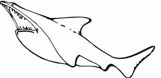 sharks coloring pages sharks coloring pages bebo pandco