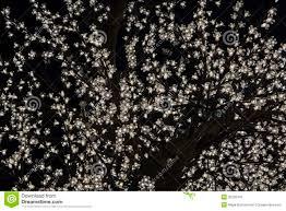 tree stock photo image of winter 35220478