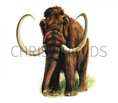 p034 wooly mammoth mammuthus primigenius illustration