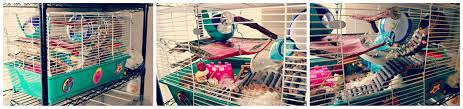 How Much Is A Hamster Cage Grreat Choice 24 Inch Hammy Happenings