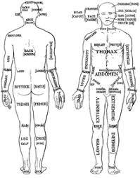 Human Anatomy Words List Of Human Anatomical Regions Wikipedia