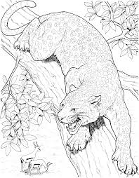 printable big cat jaguar coloring pages cat facts pinterest