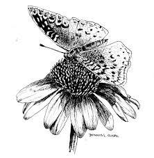 online art class butterfly on a flower pni paint basket tv