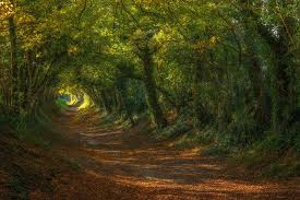 tunnel path green windmill up sussex halnaker hobbit trees