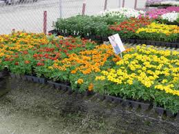 Summer Garden Plants - morgan avenue greenhouses inc milwaukee wi 53220