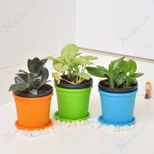 plant on desk buy low maintenance table top office desk plants online at