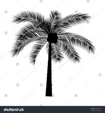 vector sketch palm tree on transparent stock vector 703636228