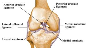 Knee Anatomy Pics Anatomy Of The Knee U2013 A Simple Understanding U2013 Osteopathy Singapore