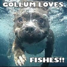 Gollum Meme - gollum memes 06