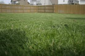 tips on feeding lawns how and when to put fertilizer on lawn