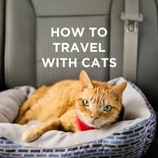 Colorado how to travel with a cat images 21 best traveling with cats in rv caravan images rv jpg