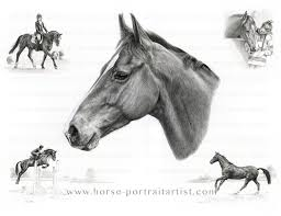 horse pencil portraits by melanie phillips