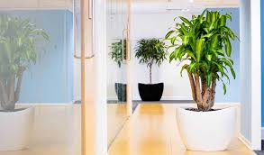 plants for office indoor office plants to buy or rent phs greenleaf