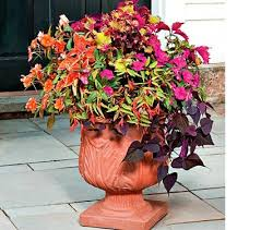Plants For Patios In The Shade 9 Best Shade Annuals Images On Pinterest Flowers Shade Annuals