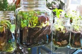 gardening in a u0027bottle u0027 8 edible plants you can grow in an indoor