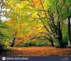 keston forest north kent autumn colours england uk vibrant colour
