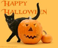 cat halloween background images black smoke cat rubbing past a halloween pumpkin photo wp14826