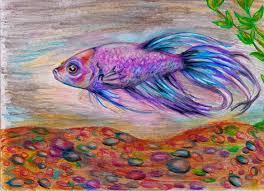 drawn fish betta fish pencil and in color drawn fish betta fish