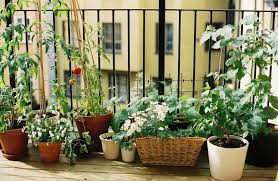 Small Urban Gardens Go Big And Go Home Micro Gardening For Small Spaces