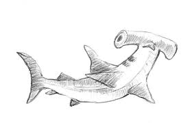 how to draw a hammerhead shark step by step