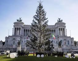 rome spent 59 000 on dead balding tree upi com