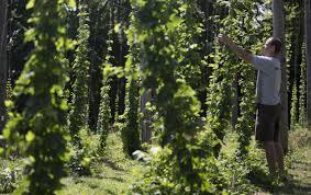 n j hops growers jump into trendy u0027farm to mug u0027 market