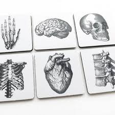 shop anatomy of the human heart on wanelo