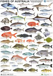 australia fishes marine organism vintage retro kraft coated poster australia fishes marine organism vintage retro kraft coated poster decorative diy wall sticker art home decor gift in wall stickers from home garden on