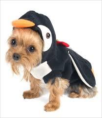 Yorkie Costumes Halloween 238 Pet Costumes Images Pet Costumes Costume