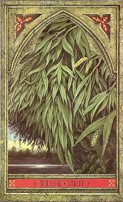willow saille jpg