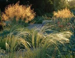 188 best ornamental grasses images on ornamental