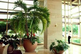 Indoor Fragrant Plants - where to buy indoor plants 20seedsbag jasmine seed indoor plants