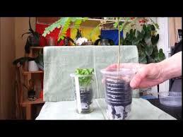 Diy Self Watering Herb Garden Diy Self Watering Pots Cheap And Very Useful Youtube
