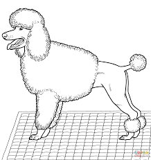 101 dalmatians poodle coloring pages coloring pages ages