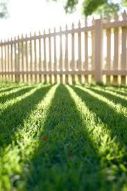 26 best lawn care images on pinterest backyard ideas garden