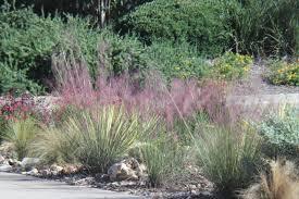 texas native plants landscaping rock oak deer celebrating texas native plant week in the garden