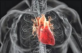 Diagram Heart Anatomy Human Anatomy Diagram Complete Information Human Anatomy Heart
