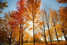fall foliage archives wentworth inn