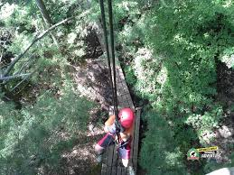 Treetop Canopy Tours by Long Point Eco Adventure Zip Lining Naturally Cracked